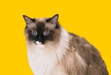 Прививки кошкам